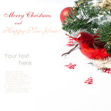 Christmas card with red bird Royalty Free Stock Image
