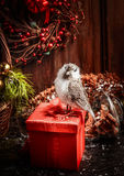 Christmas card with red gift box , decorations and bullfinch over rustic wooden background Royalty Free Stock Photography