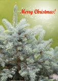 Christmas card. With red text and blue spruce tree Stock Images