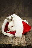 Christmas Card with White Rabbit on Wooden Background. Christmas Card with White Rabbit in the Cap of Santa Claus on Wooden Background Royalty Free Stock Photography