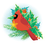 Christmas cardinal Stock Images