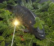 Christmas carp Stock Image