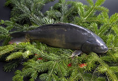 Christmas carp Stock Images