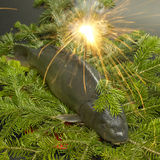 Christmas carp Royalty Free Stock Photography