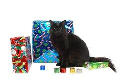 Christmas cat 10. Christmas cat close-up Royalty Free Stock Photo