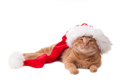 Free Christmas Cat Stock Photography - 17327912