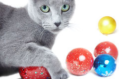 Christmas cat Stock Photos