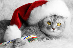 Christmas cat Stock Images