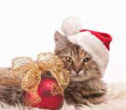 Christmas cat. Cute cat in santa's cap with Christmas ball Royalty Free Stock Images