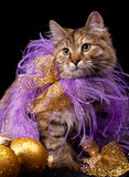Christmas cat. Beautiful cat with Christmas decoration accessories on black background Royalty Free Stock Photography
