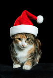 Christmas cat. Little cat in study desire happy christmas Stock Photography