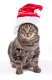 Christmas cat. A cat with a red Christmas hat Stock Image