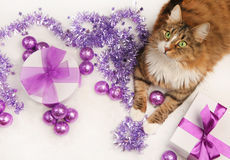 Christmas cat Royalty Free Stock Image