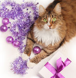 Christmas cat Royalty Free Stock Photos