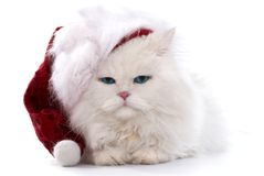 Christmas cat Stock Image