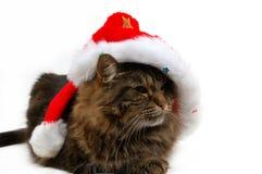 Christmas cat. Close-up Stock Photos