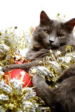 Christmas Cat. A gray kitten playing in golden and silver glittering strings with Christmas decoration pieces Royalty Free Stock Photos