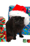 Christmas cat 6. Christmas cat close-up Royalty Free Stock Images