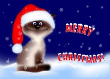 Christmas - Cat Royalty Free Stock Photography