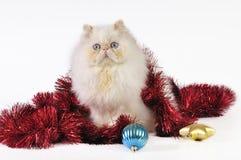 Free Christmas Cat Royalty Free Stock Photo - 7136475