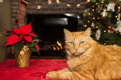 Christmas Cat. A Cute Cat relaxing by the fire Stock Images