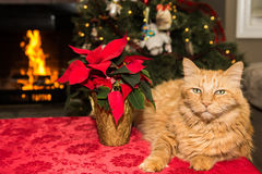 Christmas Cat. A Cute Cat relaxing by the fire Stock Photo