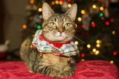 Christmas Cat Stock Photos