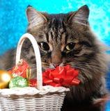 Christmas cat Stock Photography