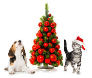 Christmas cat and dog Stock Images