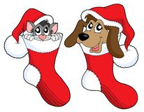 Christmas cat and dog vector. Cute cat and dog in Christmas socks - vector illustration Stock Image
