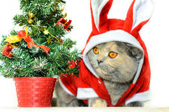 Christmas cat. Dressing up in red rabbit costume and sitting near Christmas tree Stock Photo
