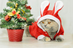 Christmas cat dressing up in red rabbit costume Stock Photo