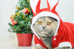 Christmas cat dressing up in red rabbit costume Royalty Free Stock Image