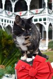 Christmas Cat. Cat on a fence at Christmas in Fernandina Florida Stock Images