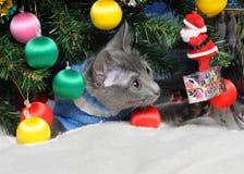 Christmas cat among a fur-tree. Lying kitten with christmas decorations under the christmas tree royalty free stock photos