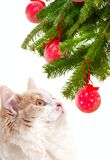 Christmas cat among a fur-tree Stock Photo