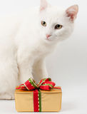 Christmas cat gift Stock Images