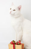 Christmas cat gift Royalty Free Stock Images
