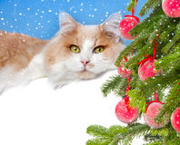 Christmas cat and gift Stock Photo