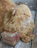 Christmas cat with gift box. Royalty Free Stock Photography