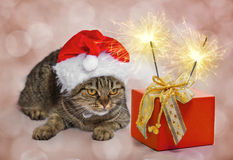 Christmas cat. With a gift and sparklers stock images