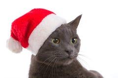 Christmas Cat - Gray Cat Santa, Christmas Pet with Santa Claus H Royalty Free Stock Image