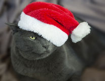 Christmas Cat - Gray Cat Santa, Christmas Pet with Santa Claus H Royalty Free Stock Photos