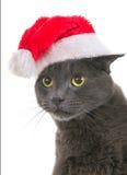 Christmas Cat - Gray Cat Santa, Christmas Pet with Santa Claus H Royalty Free Stock Photos