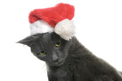Christmas cat - Gray Cat Santa Royalty Free Stock Image