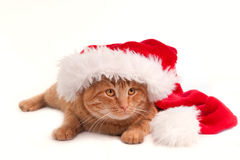 Christmas Cat with hat Stock Photo