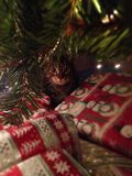 Christmas cat Royalty Free Stock Photo