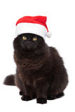 Christmas cat isolated Royalty Free Stock Photo