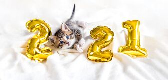 Christmas cat 2021. Kitty with gold foil balloons number 2021 new year. Striped kitten on Christmas festive white