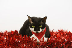 Christmas Cat2 Stock Images